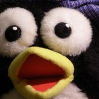 El pingüino Jote